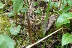冬虫夏草的名字由来,为什么这么叫?