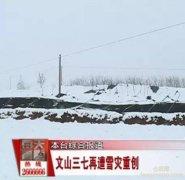 2015年云南文山三七再遭雪灾重创