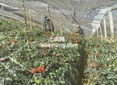 助农增收,文山三七产业绿色发展