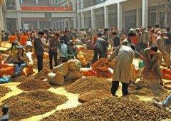 云南文山三七国际交易市场,正式开始火爆