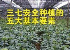 三七安全种植的五大基本要素?