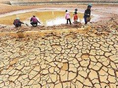 云南三七干旱,三七开始大面积死亡