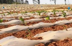 云南干旱仍在持续,未来三天或有雨