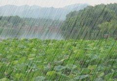 暴雨突袭,今年三七会不会涨价?