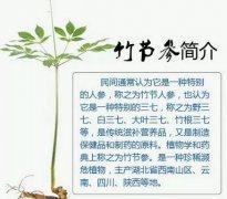 云南野生竹节参多少钱一斤