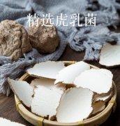 虎乳菌的功效与作用_吃法禁忌