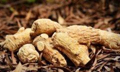 西洋参粉的功效与作用及食用方法