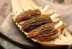 羊肚菌炖乳鸽的功效与作用,吃法禁忌大